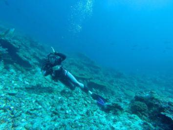 Requins en vue ! - Golden passage #3