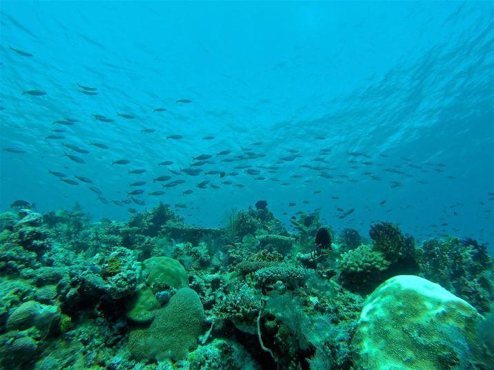 Encore un jardin de corail - Tatawa Besar #1