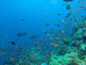 Gros pélagiques au milieu des poissons - Batu Bolong #3