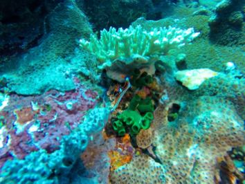 Nudibranche - Batu Bolong #8