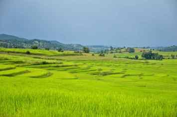 Rizieres terrasses Trek-Kalaw-Inle-Myanmar-blog-voyage-2016 54