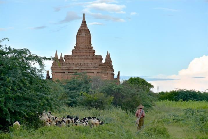 Berger Decouverte-Bagan-Myanmar-Birmanie-blog-voyage-2016 57