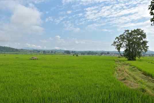 Rizières Hsipaw Myanmar blog voyage 2016 28