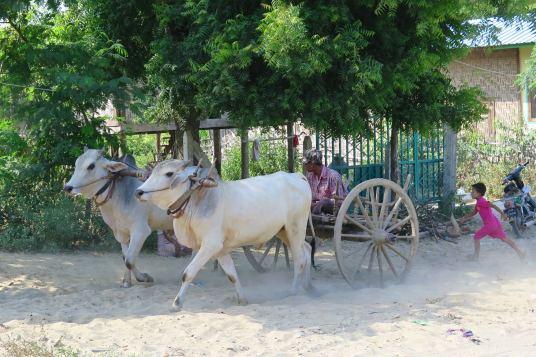 Charrette Mandalay-Sagaing-Mingun-Myanmar-Birmanie-blog-voyage-2016 19