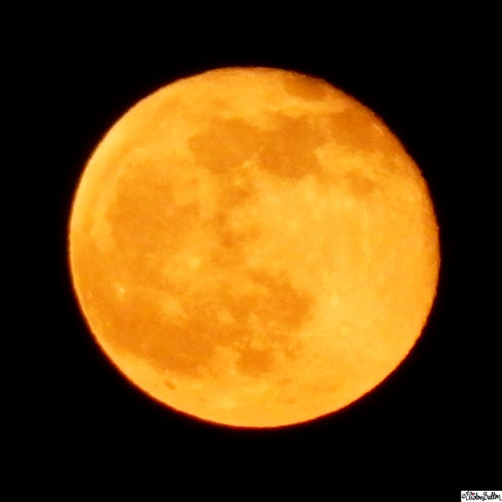 Huge Orange Moon Close Up - Around Here...April 2015 at www.elistonbutton.com - Eliston Button - That Crafty Kid – Art, Design, Craft & Adventure.