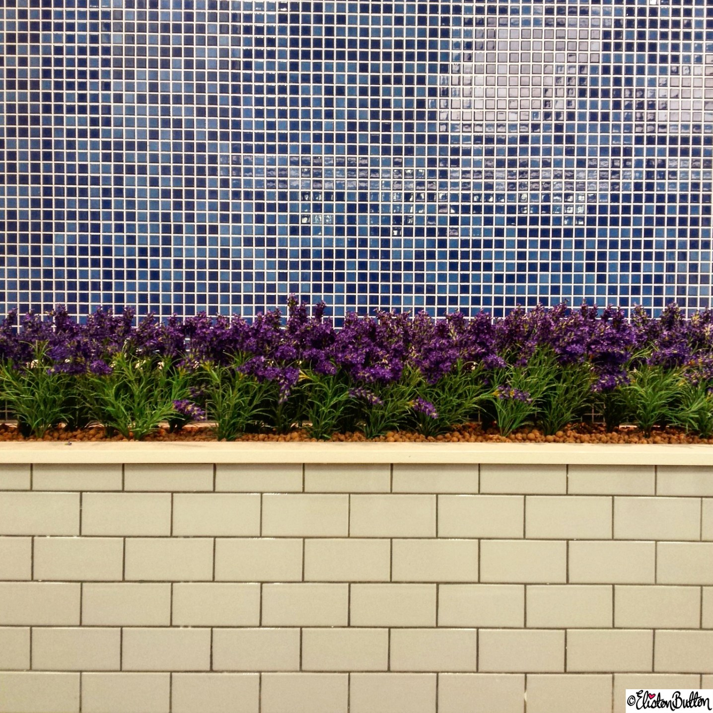 Tiled Wall and Lavender at Carluccios - Around Here...September 2015 at www.elistonbutton.com - Eliston Button - That Crafty Kid – Art, Design, Craft & Adventure.