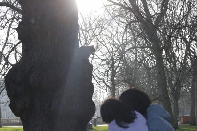 Squirrel, St. James Park, London