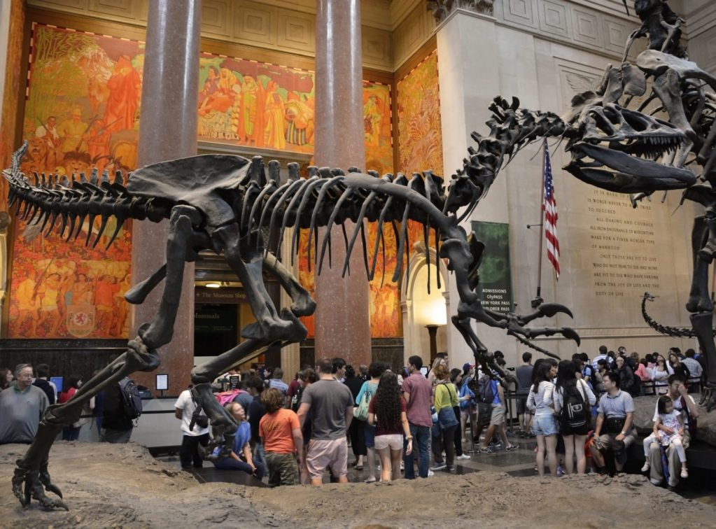 American Museum of Natural History – dinosaur shot