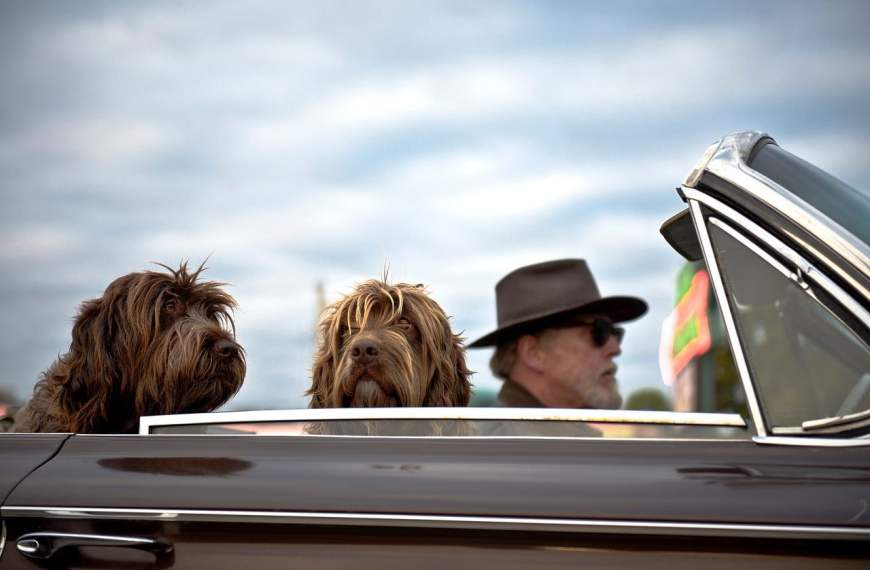10 Tips for Traveling With Dogs in the UK