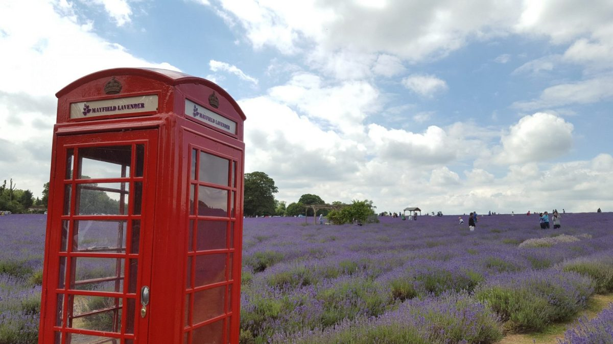 Close up of red telephone box at Mayfield Lavender Farm