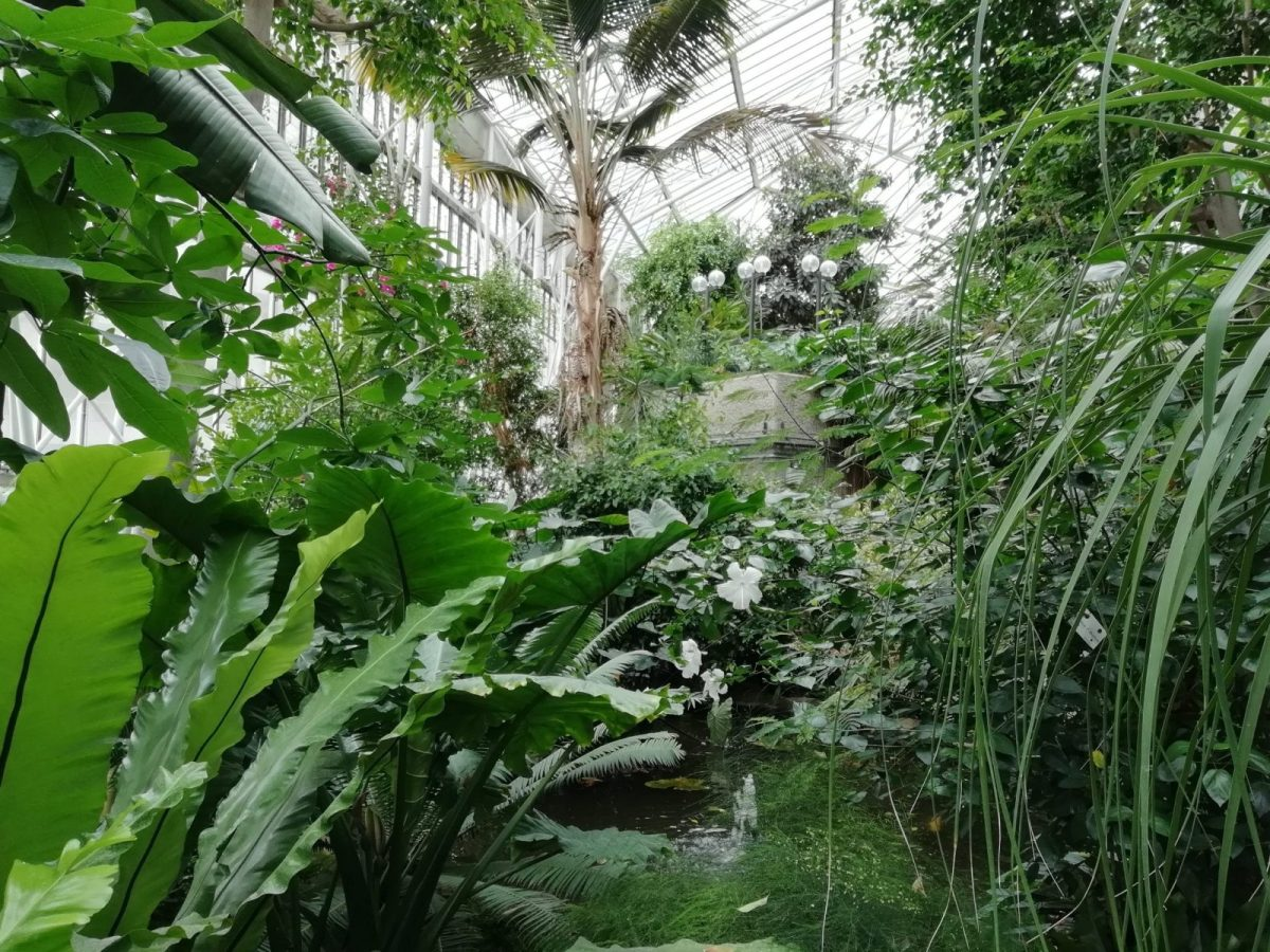 Visiting Barbican Conservatory: Photo Gallery 1