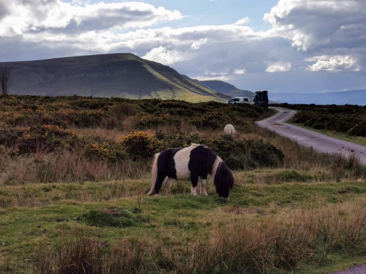 Tiny Horses on Hay Bluff! 9