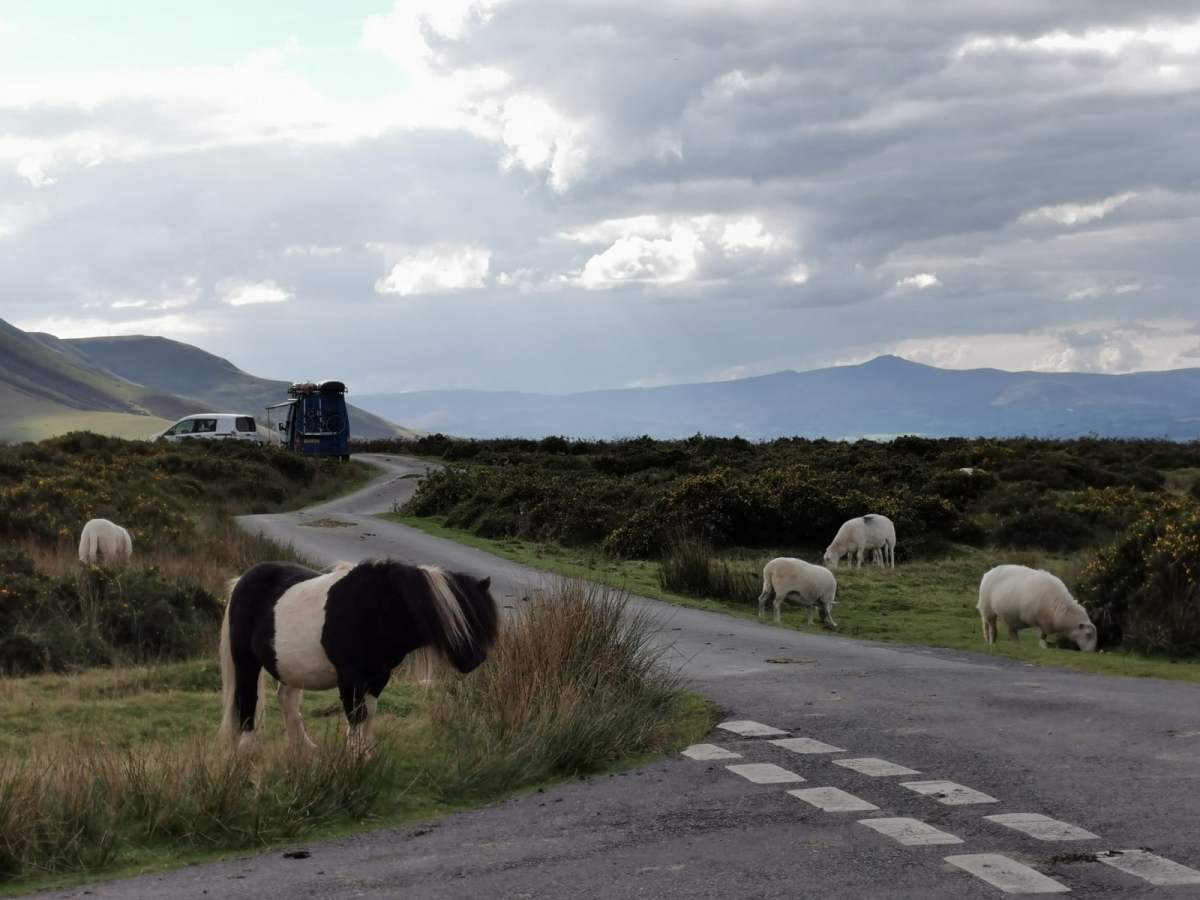 Tiny Horses on Hay Bluff! 7