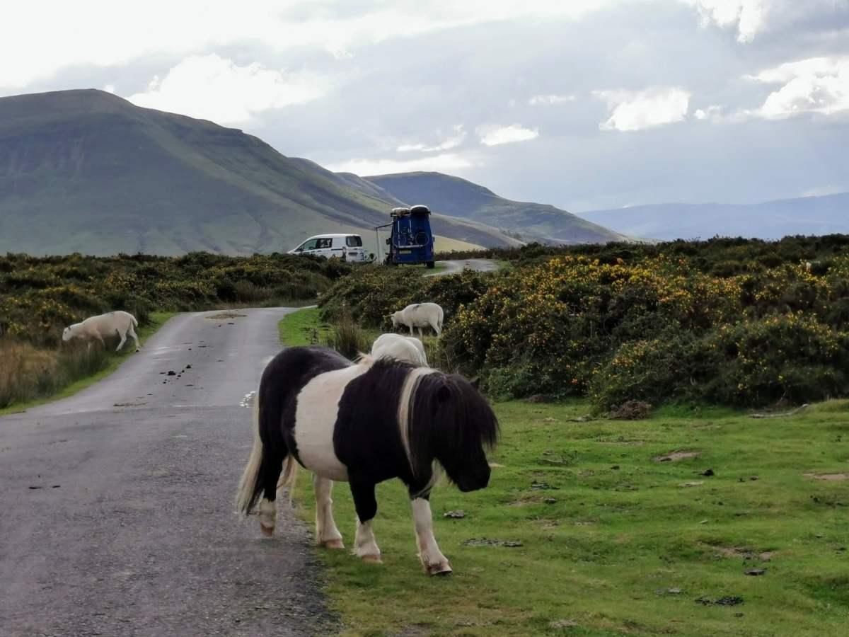 Tiny Horses on Hay Bluff! 6