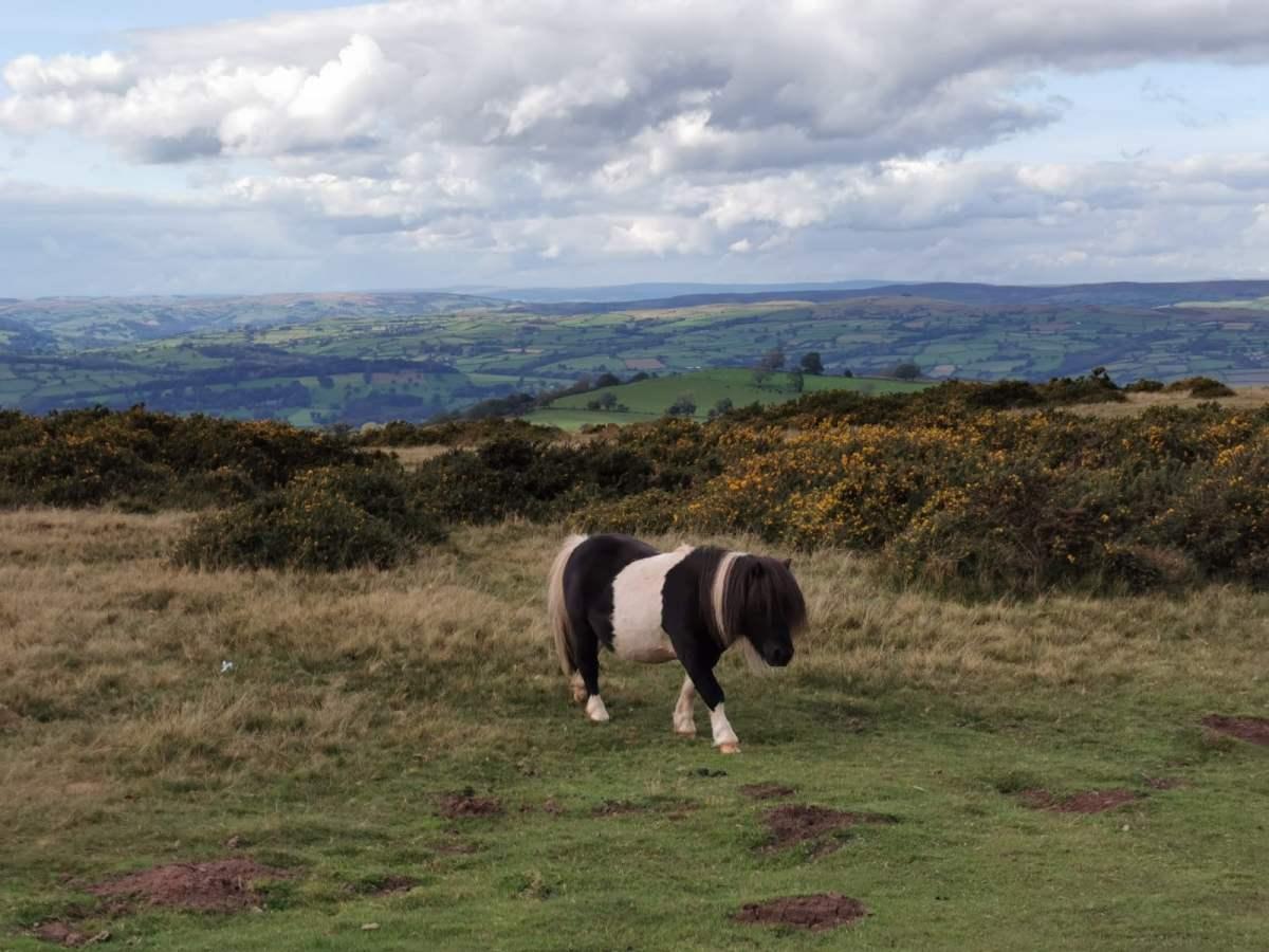 Tiny Horses on Hay Bluff! 5