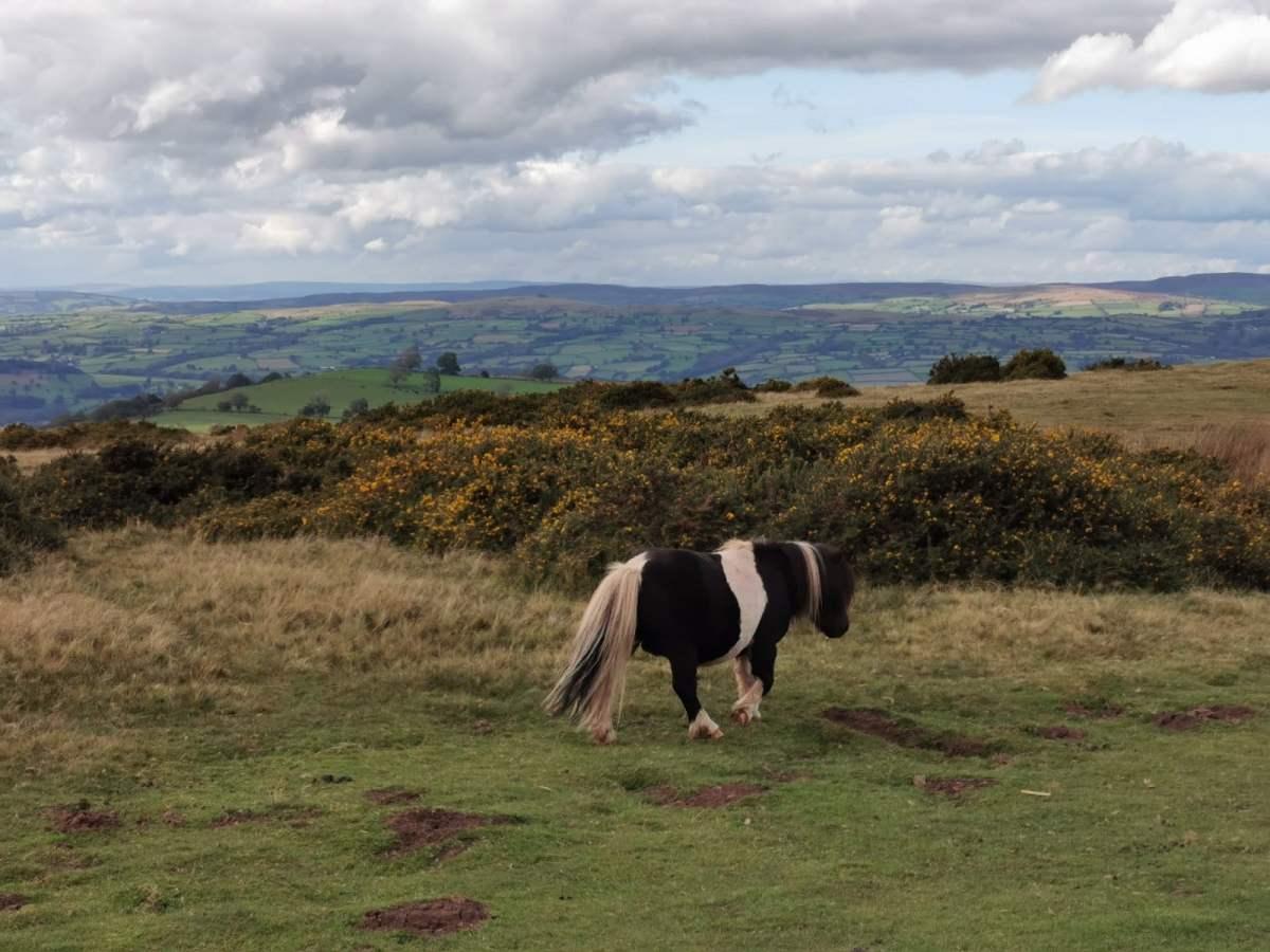 Tiny Horses on Hay Bluff! 4