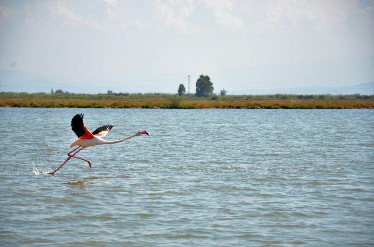 sea landscape bird water