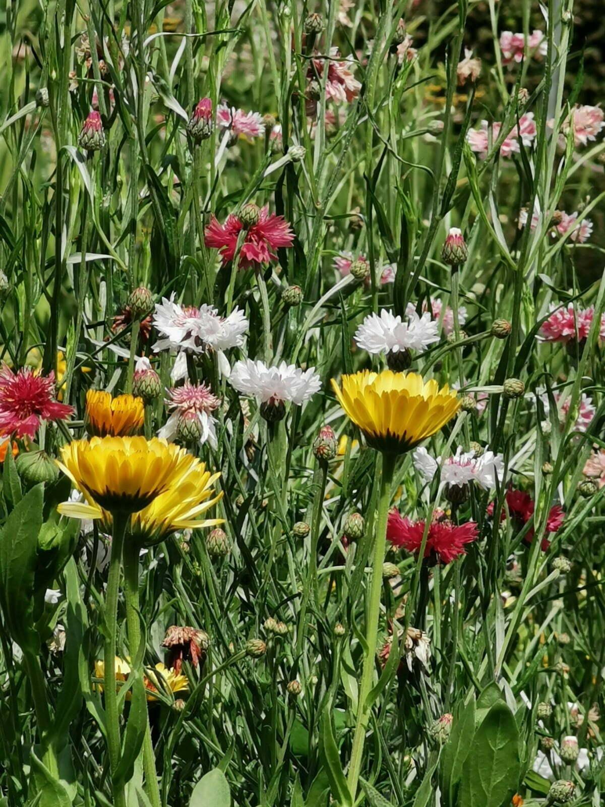 Bateman's Garden: A Kaleidoscope of Colours at Rudyard Kipling's National Trust Home 6