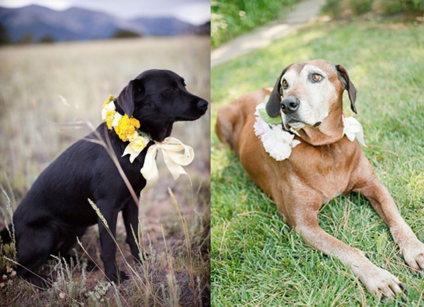 Wedding-Flower-Dog-Collars