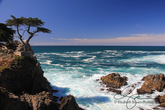Lone Cypress on the Monterey Peninsula, Monterey, CA.