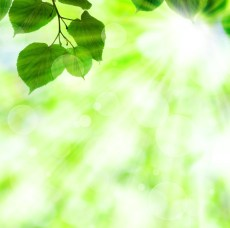 sunlight through green leaves