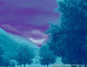 Rose Station Purple Sky