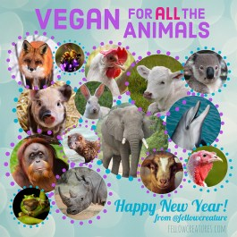 Vegan for all the animals, New Year 2021