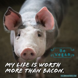 A life is worth so much more than bacon.