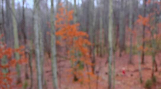 Untitled (Diana) HD video still 2011