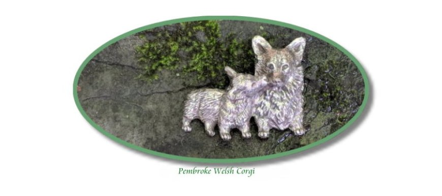 Pembroke Welsh Corgi mother and puppy pin on stone and moss backdrop