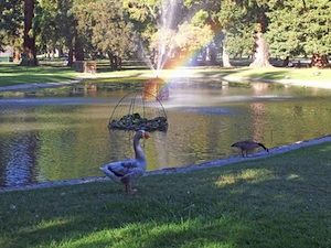 A Rainbow with Geese in William Land Park