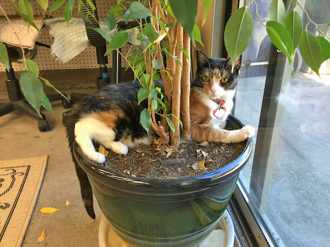 adopt this kitty