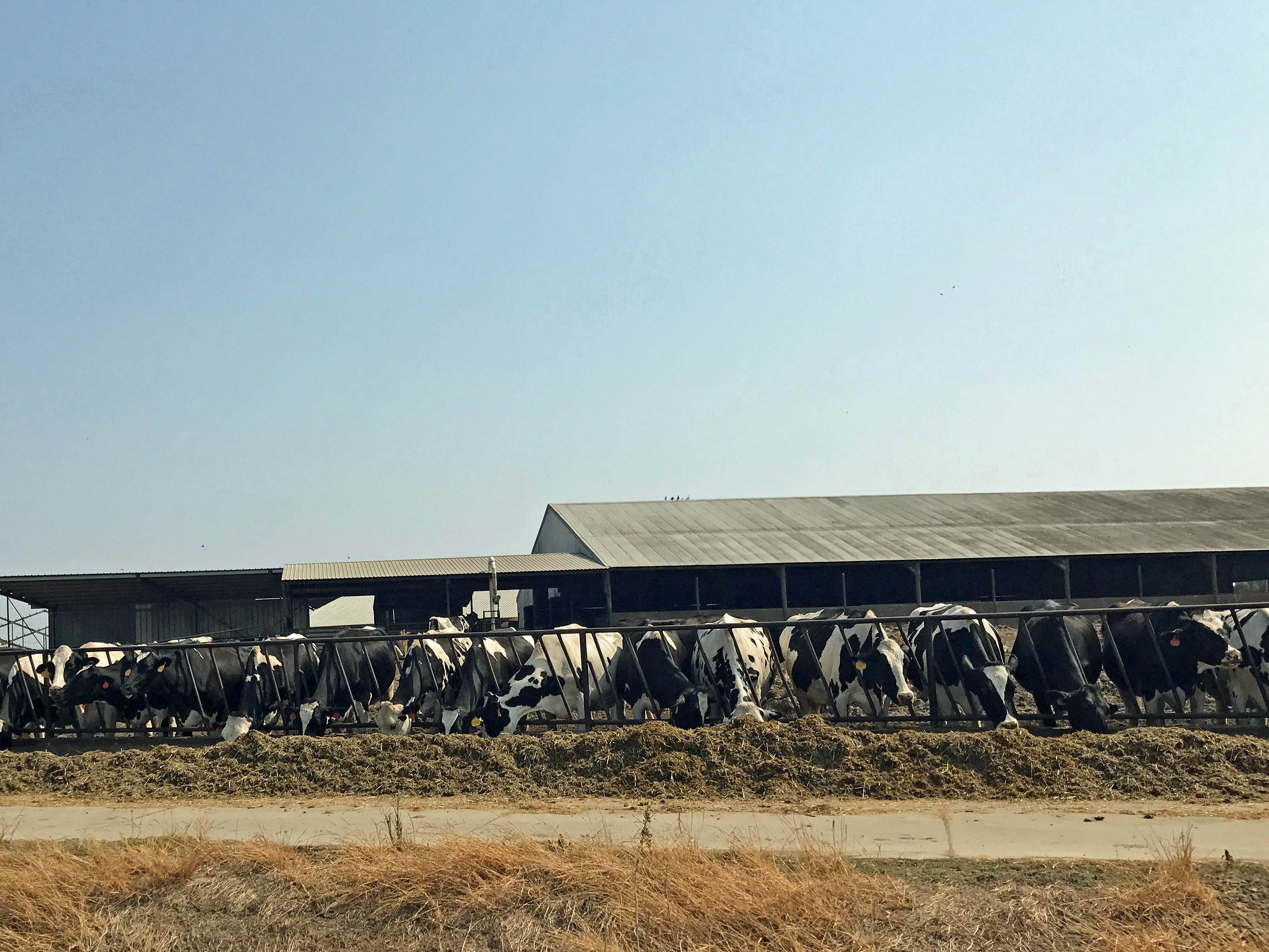 The Downside to Buying Homes Near Dairy Farms in Elk Grove