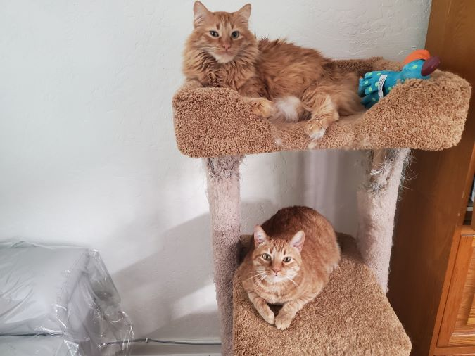 Cats, Covid19, And Seling Sacramento Real Estate