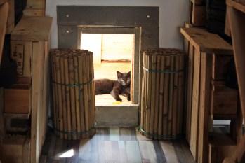 pebbles-kitty-catcafe-8