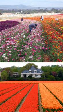 plantacion de flores