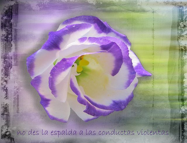 Rosa violeta. Ana Orantes