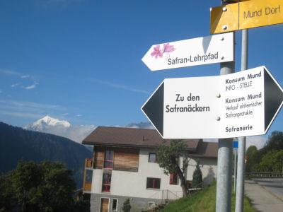 Safran, das rote Gold von Mund im Schweizer Wallis