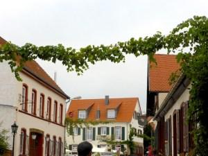 Weingirlanden_Asselheim_2015_08_19_Foto_Elke_Backert (1)