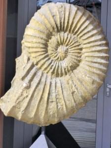 Fossil Cortina