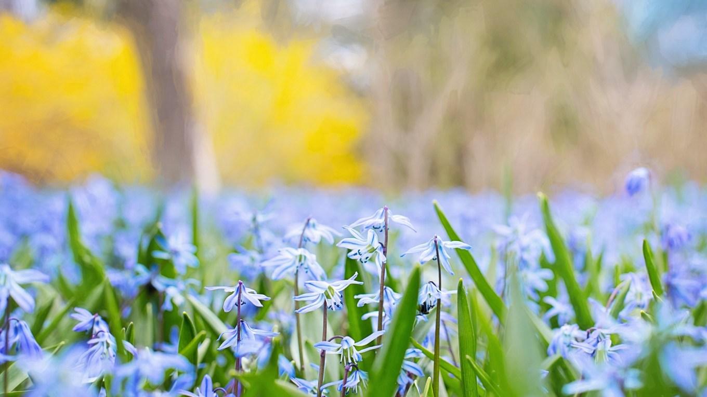 Blumenmärchen