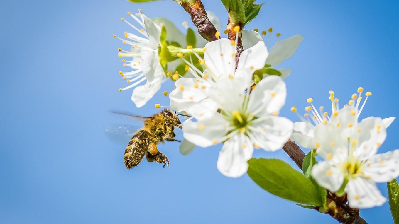 Frühlingsgeschichte Bienen