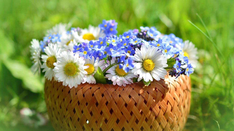 Frühling kommt! - Gedicht