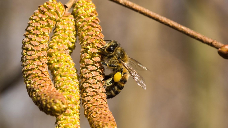 Bienenmärchen