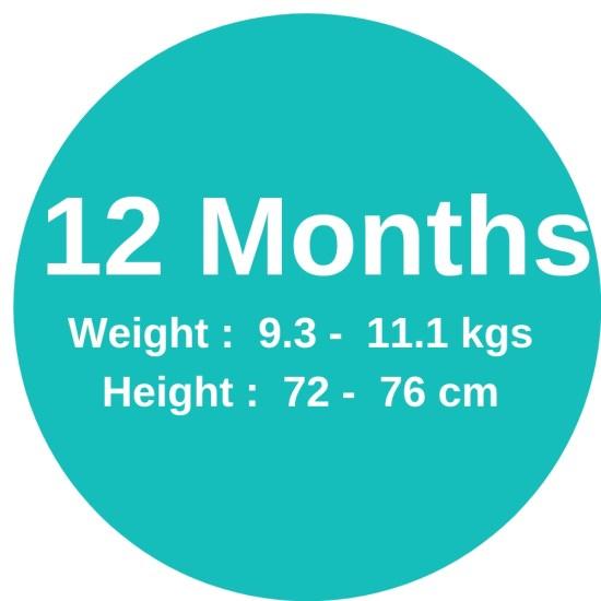 12m (9.3-11.1kgs)