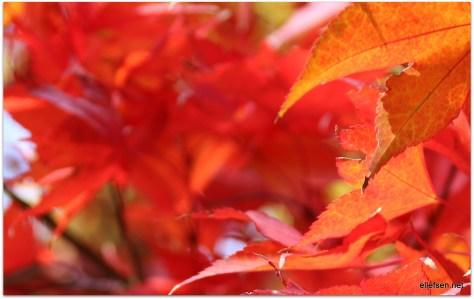 Autumn colors, Central Park, NYC