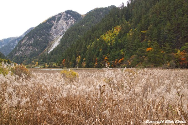 Jiuzhaigou National Park: Reed Lake