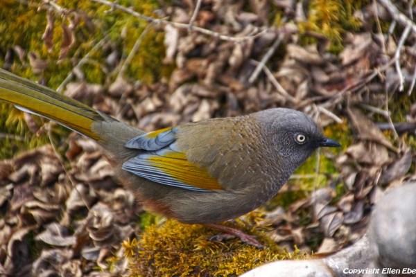 Bird at Huanglong National Park