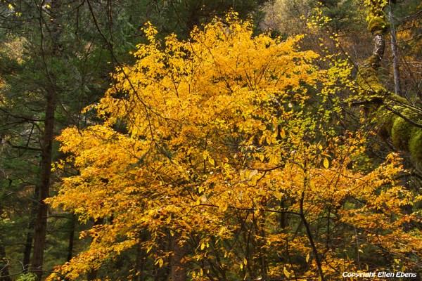 Autumn colours at Jiuzhaigou National Park