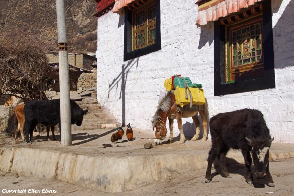 Animals at Chimpuk Hermitage